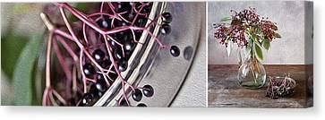 Elderberry Canvas Print by Nailia Schwarz