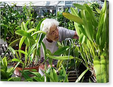 Elderly Woman Examining Plants Canvas Print by Jim West
