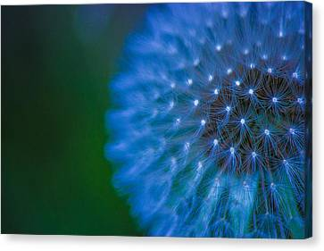 Electric Blue Canvas Print by Martin Newman