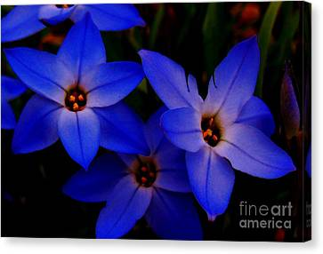 Electric Blue Canvas Print by Sharon Costa