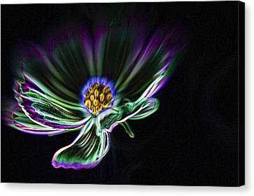 Electric Daisy Canvas Print by Scott Campbell