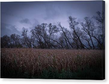 Canvas Print featuring the photograph Electric Forest by Jason Naudi Photography