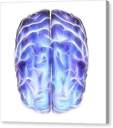 Electrical Activity In The Brain Canvas Print by Alfred Pasieka