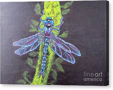 Electrified Blue Dragonfly Canvas Print by Kimberlee Baxter