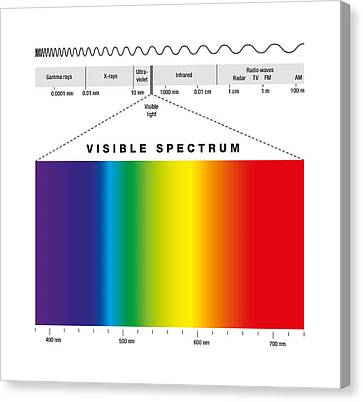 Electromagnetic Spectrum And Visible Light Canvas Print by Peter Hermes Furian