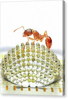 Electronic Compound Eye With Ant Canvas Print by Professor John Rogers, University Of Illinois