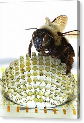 Electronic Compound Eye With Bee Canvas Print
