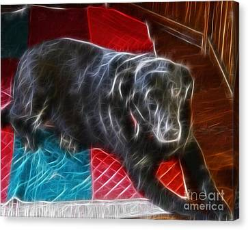 Electrostatic Dog And Blanket Canvas Print by Barbara Griffin