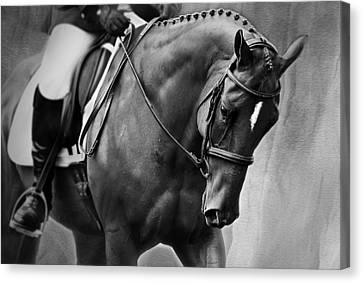 Elegance - Dressage Horse Canvas Print by Michelle Wrighton