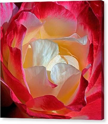 Elegance Canvas Print by Karen Harrison