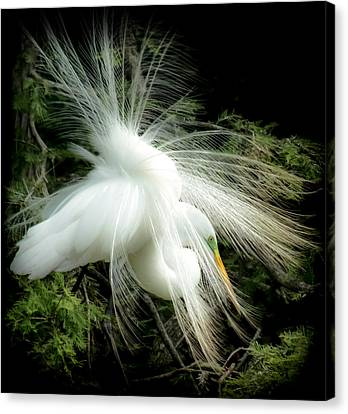 White Birds Canvas Print - Elegance Of Creation by Karen Wiles