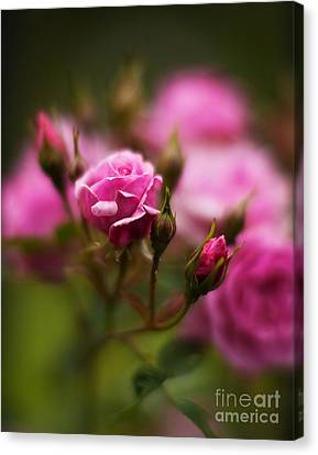 Elegant Pink Canvas Print by Mike Reid