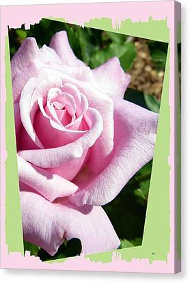Elegant Royal Kate Rose Canvas Print by Will Borden