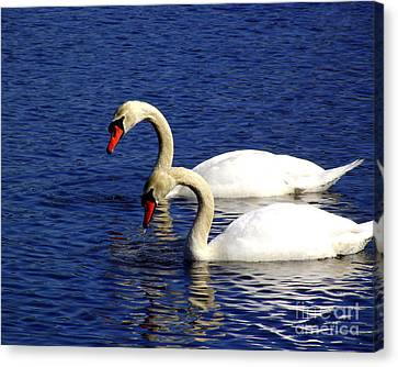 Elegant Swan Pair  Canvas Print by CapeScapes Fine Art Photography