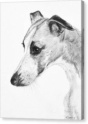 Rescued Greyhound Canvas Print - Elegant Whippet by Kate Sumners