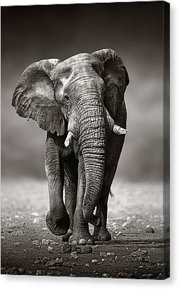 Sepia Tone Canvas Print - Elephant Approach From The Front by Johan Swanepoel