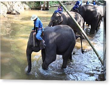 Bath Canvas Print - Elephant Baths - Maesa Elephant Camp - Chiang Mai Thailand - 01131 by DC Photographer