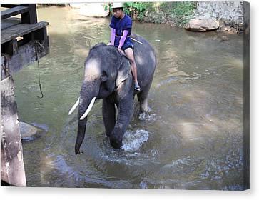 Elephant Baths - Maesa Elephant Camp - Chiang Mai Thailand - 011313 Canvas Print by DC Photographer