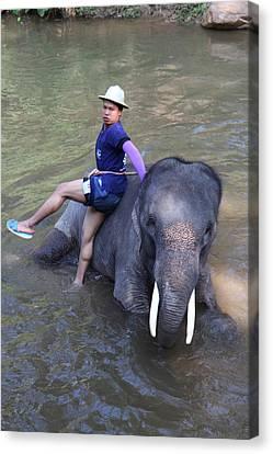 Elephant Baths - Maesa Elephant Camp - Chiang Mai Thailand - 011316 Canvas Print by DC Photographer