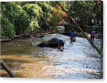 Elephant Baths - Maesa Elephant Camp - Chiang Mai Thailand - 011320 Canvas Print by DC Photographer