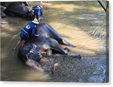 Elephant Baths - Maesa Elephant Camp - Chiang Mai Thailand - 011321 Canvas Print by DC Photographer