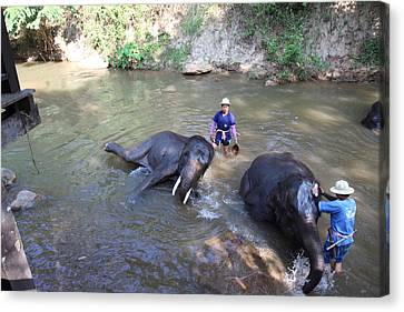 Elephant Baths - Maesa Elephant Camp - Chiang Mai Thailand - 011323 Canvas Print by DC Photographer