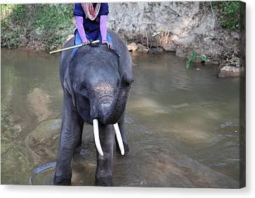 Elephant Baths - Maesa Elephant Camp - Chiang Mai Thailand - 01134 Canvas Print by DC Photographer
