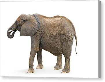 Canvas Print featuring the photograph Elephant by Charles Beeler
