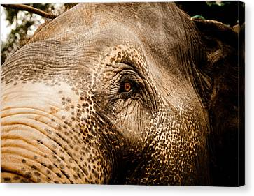 Tibetan Buddhism Canvas Print - Elephant Eye by Raimond Klavins