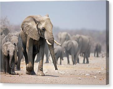 Elephants Canvas Print - Elephant Feet by Johan Swanepoel