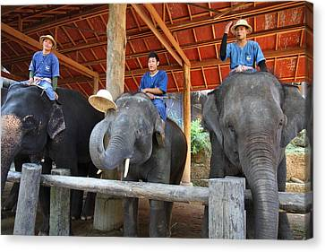 Elephant Greeting - Maesa Elephant Camp - Chiang Mai Thailand - 01132 Canvas Print by DC Photographer