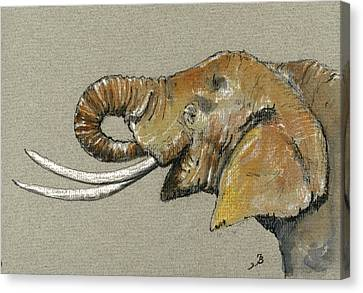 Elephant Head  Canvas Print by Juan  Bosco