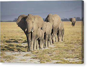 Elephant Herd  Canvas Print by Richard Garvey-Williams