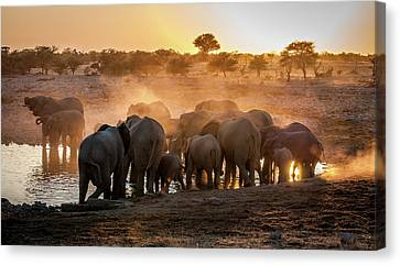 Elephant Huddle Canvas Print
