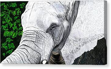 Elephant II Canvas Print by Jeanne Fischer