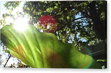 Bamboo House Canvas Print - Elephant Leaf 1 by Jonathon Hernandez