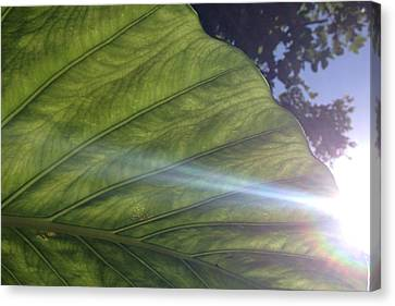 Bamboo House Canvas Print - Elephant Leaf 3 by Jonathon Hernandez