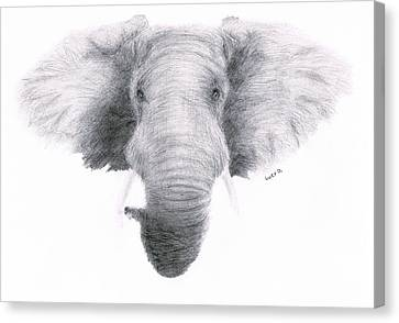 Elephant Canvas Print by Lucy D