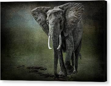 Elephant On The Rocks Canvas Print by Mike Gaudaur