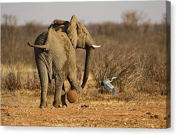 Elephant On The Run Canvas Print by Paul W Sharpe Aka Wizard of Wonders