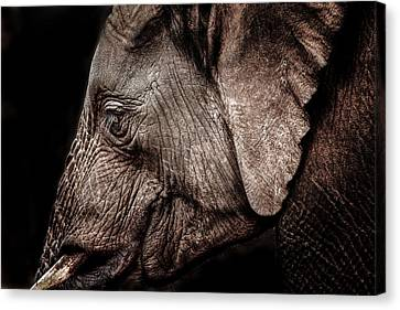 Elephant Profile Canvas Print
