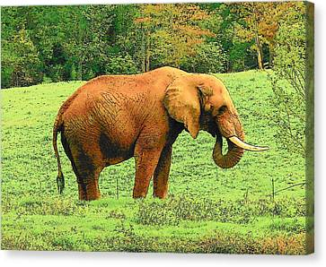 Canvas Print featuring the photograph Elephant by Rodney Lee Williams
