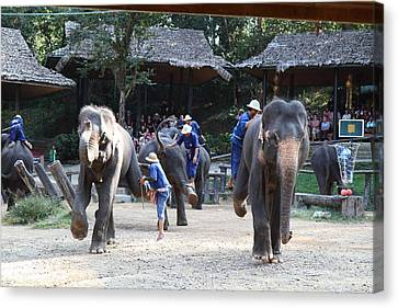 Elephant Show - Maesa Elephant Camp - Chiang Mai Thailand - 011312 Canvas Print by DC Photographer