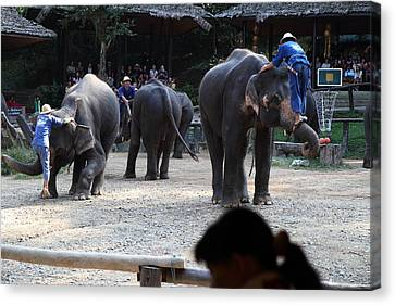 Elephant Show - Maesa Elephant Camp - Chiang Mai Thailand - 011313 Canvas Print