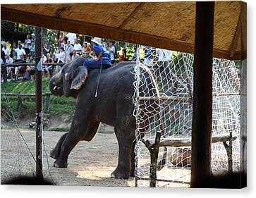 Elephant Show - Maesa Elephant Camp - Chiang Mai Thailand - 011333 Canvas Print by DC Photographer