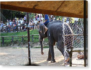 Elephant Show - Maesa Elephant Camp - Chiang Mai Thailand - 011335 Canvas Print by DC Photographer