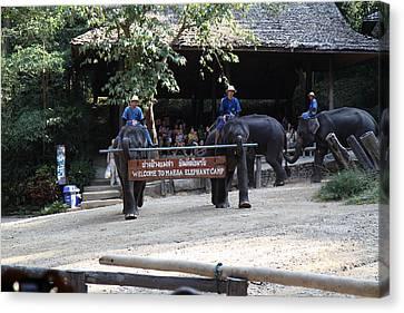 Elephant Show - Maesa Elephant Camp - Chiang Mai Thailand - 01134 Canvas Print by DC Photographer