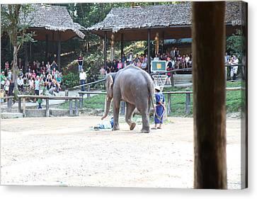 Asia Canvas Print - Elephant Show - Maesa Elephant Camp - Chiang Mai Thailand - 011351 by DC Photographer