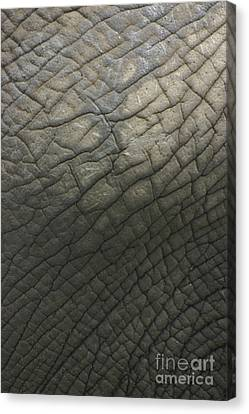 Elephant Skin Canvas Print