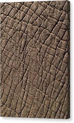 Elephant Skin, Zimbabwe Canvas Print by Pete Oxford